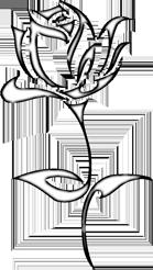 Manaqib-Rose